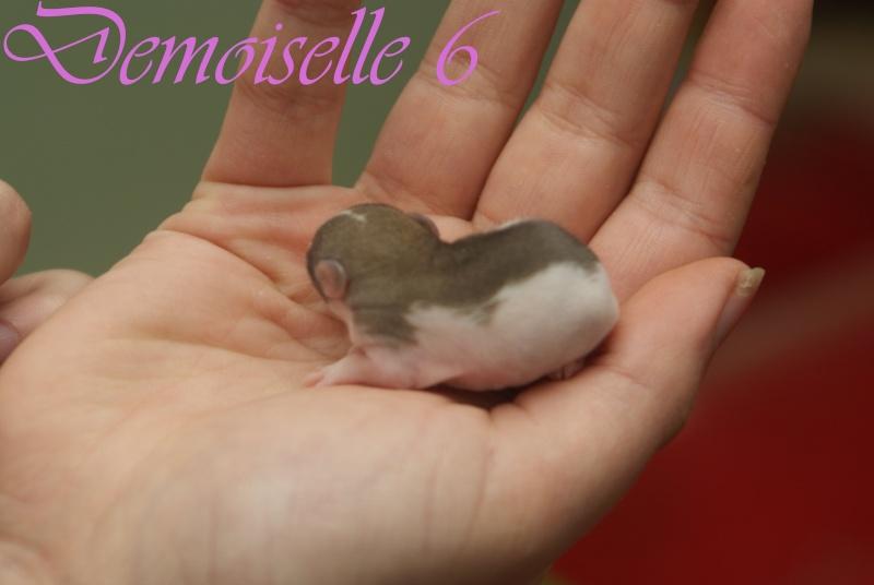 demois42