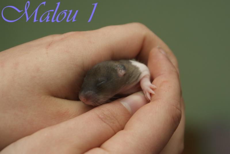 malou_14