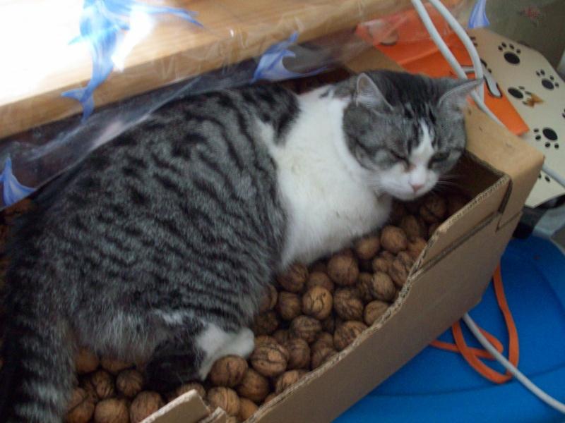 pute 66 belle chatte ouverte