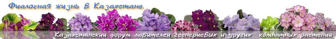 Казахстанская фиалка