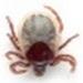 https://i65.servimg.com/u/f65/12/25/27/65/zoolog10.jpg