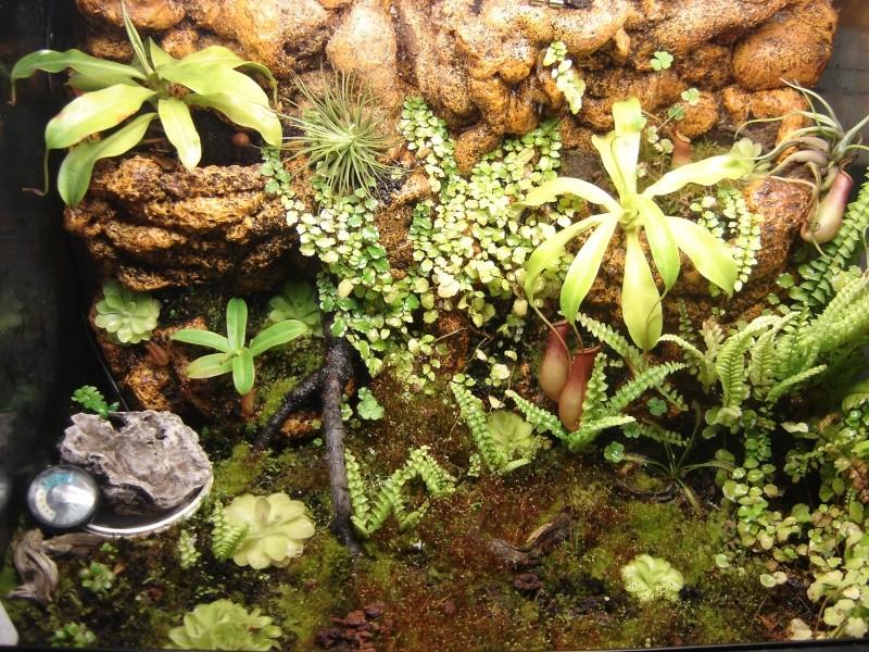 terrarium plantes carnivores photo du terra. Black Bedroom Furniture Sets. Home Design Ideas