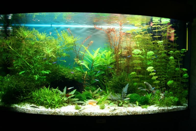 Vend aquarium juwel 180 complet for Vend aquarium