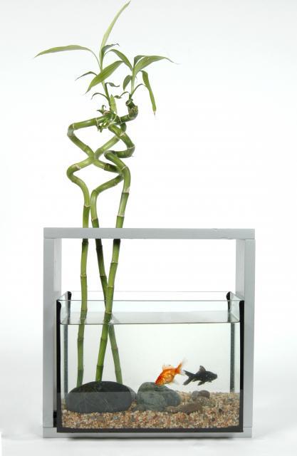 Quel plante choisir - Lucky bambou acheter ...
