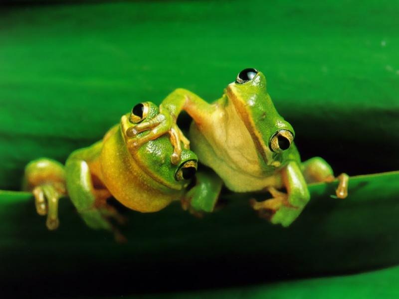 frogs11.jpg