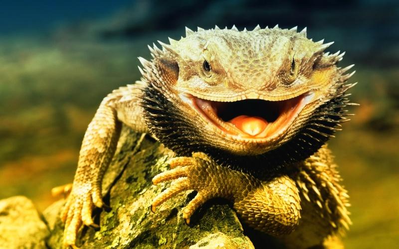lizard11.jpg