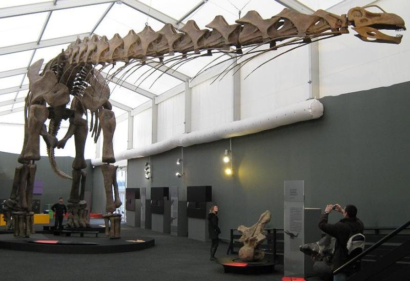 Dino Ausstellung Bonn