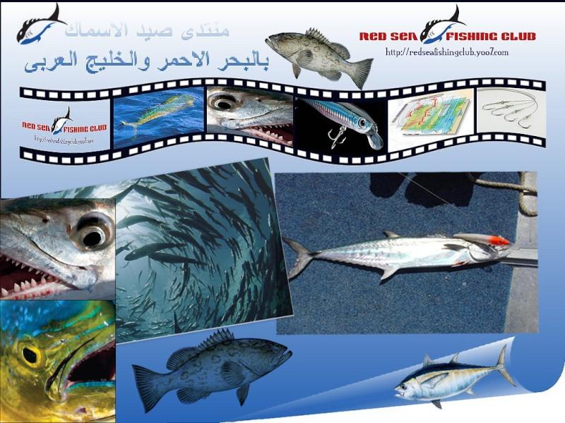 منتدى صيد الاسماك بالبحر الاحمر و الخليج العربى