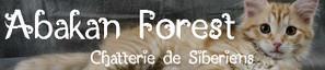 Bannière de la chatterie Abakan Forest
