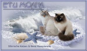 Bannière de la chatterie Etu Moana