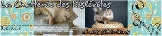 Bannière de la chatterie Kislévites