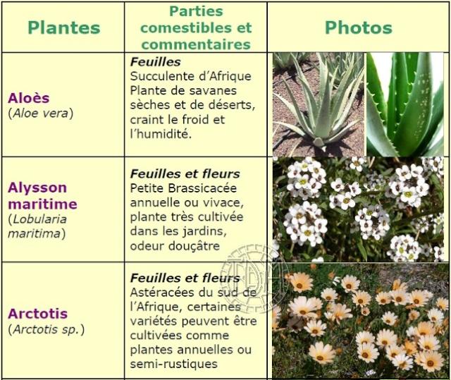 fleur comestible pour tortue terrestre