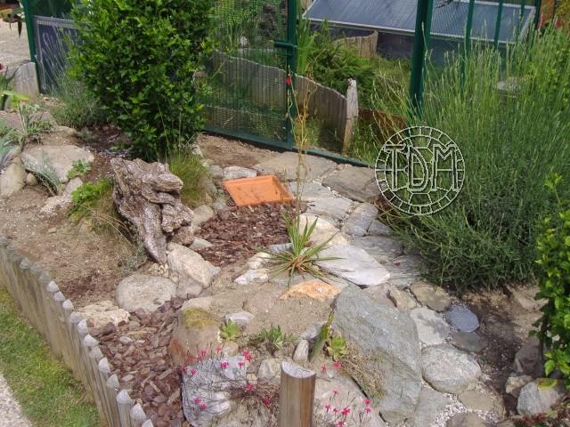 tortue horsfieldii en terrarium