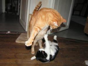 2 chats se battent violemment en Russie - vido Dailymotion