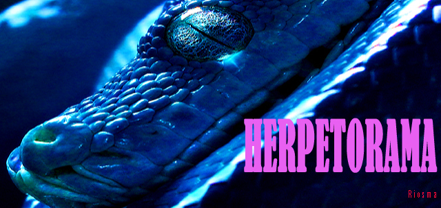 THIS IS HERPETORAMA!