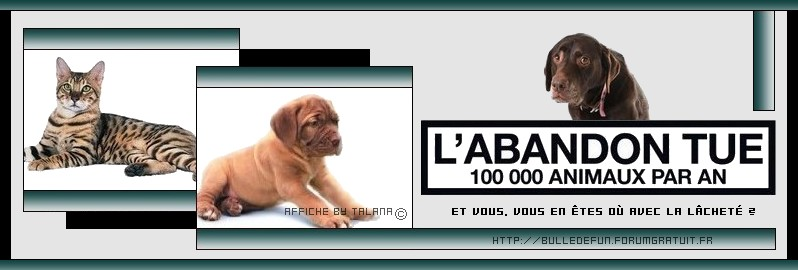 L'abandon tue 100 000 animaux par an