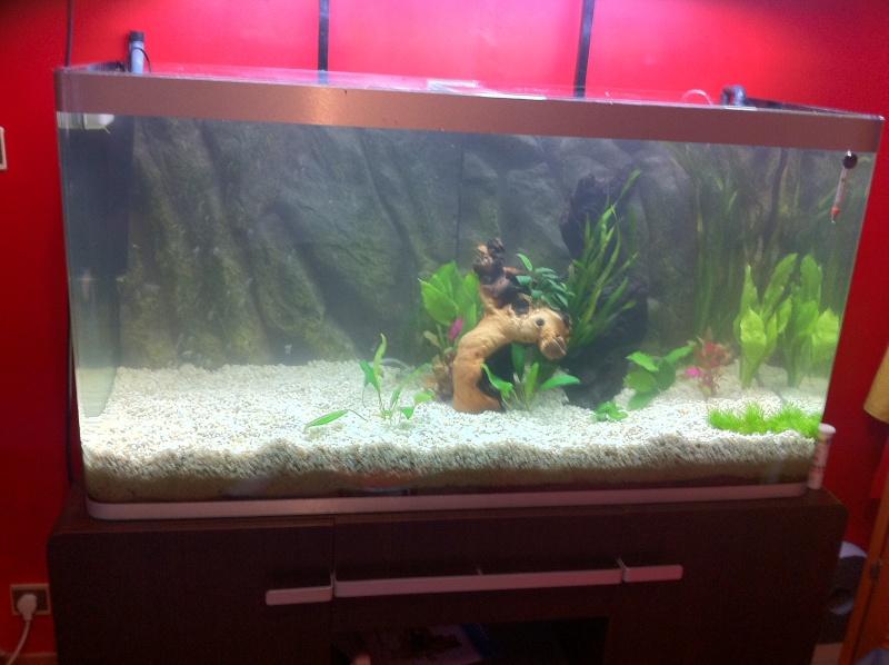 Mon aquarium osaka petit 350 l for Terreau aquarium