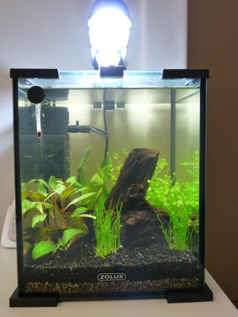 Pr sentation de mon tout premier nanolife de 20l for Filtre aquarium 20l