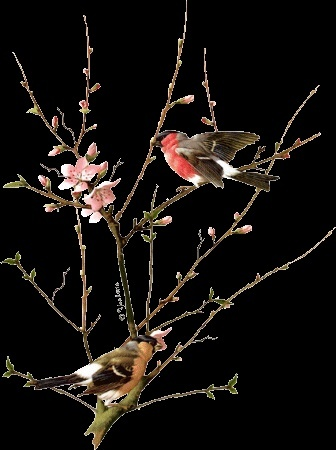 Un air de printemps. dans POESIES, TEXTES 296f9c10