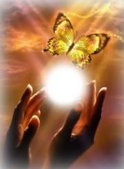 soleil papillon